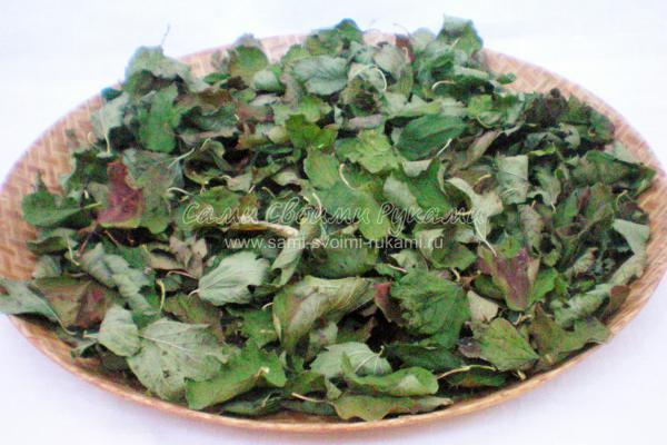 рецепты овощных салатов без мяса