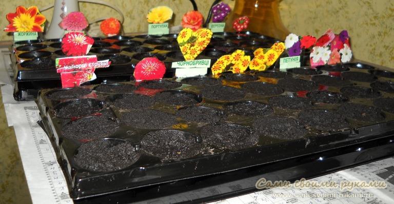 Посадка цветов на рассаду