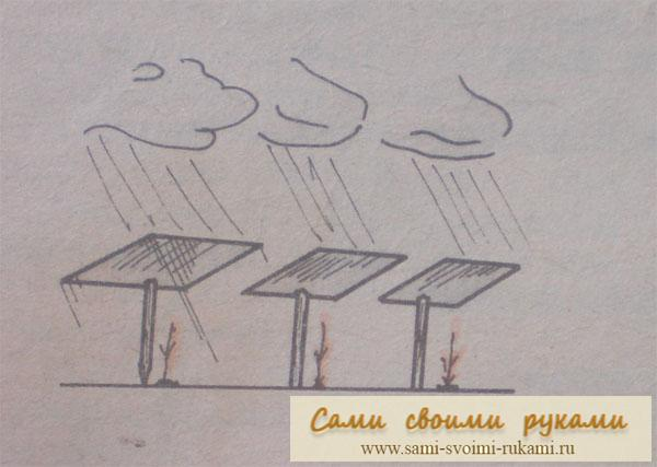 Как защитить рассаду от погодных условий