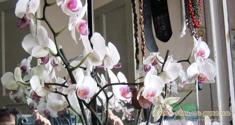 Как вырастить деток орхидеи в домашних условиях