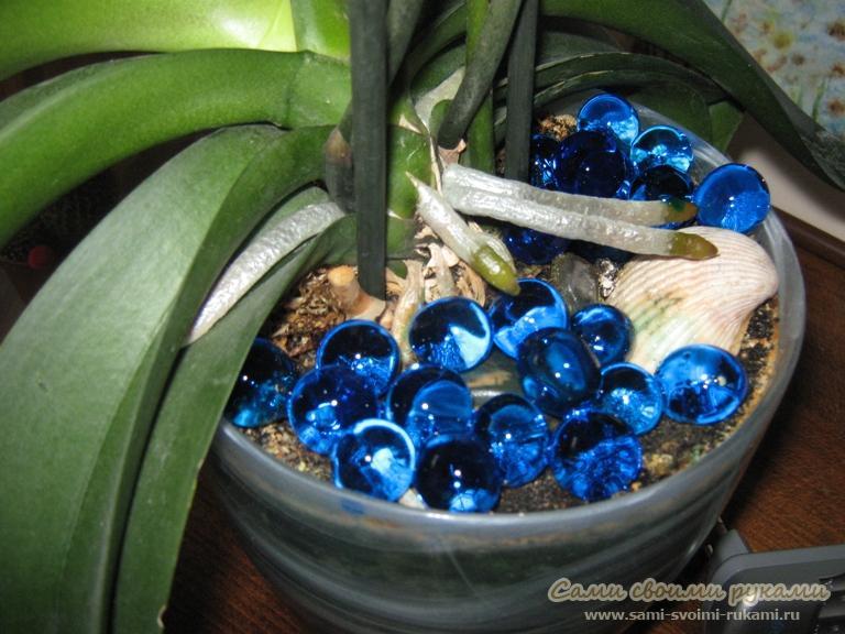 Можно ли орхидею сажать в гидрогель 46