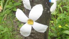 Цветы из пластиковых бутылок - украшаем двор