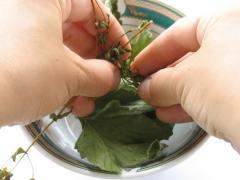 Чай из трав своими руками - рецепт приготовления