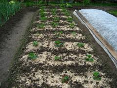 Богатый урожай клубники в вашем саду