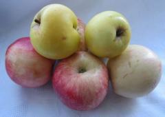 Повидло из яблок