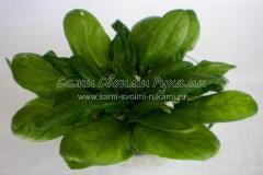 Оформляем салат с редисом зеленью