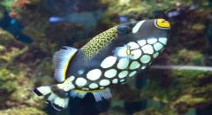 Как выбрать рыбок для аквариума самостоятельно - фото рыбок и советы