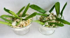 Салат с черемшой и грецким орехом