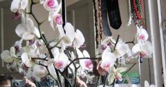 Как выращивать орхидеи дома - личный опыт, фото