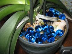 Гидрошарики в комнатном цветоводстве