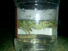 Лосьон от прыщей из лаврового листа